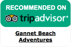 Gannet Beach Adventures - Recommended on tripadvisor